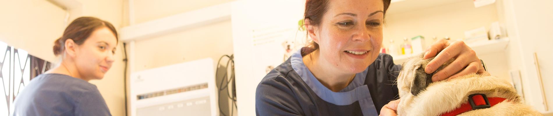 Margit, vet, animal clinic